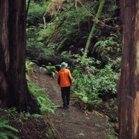 Color - Redwoods II